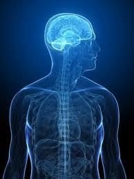 Alzheimers and Neurodegeneration in the Brain