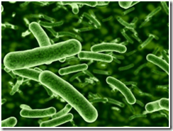 Antiobiotics Can Cause IBS