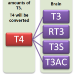 Low T3 Symptoms and Causes