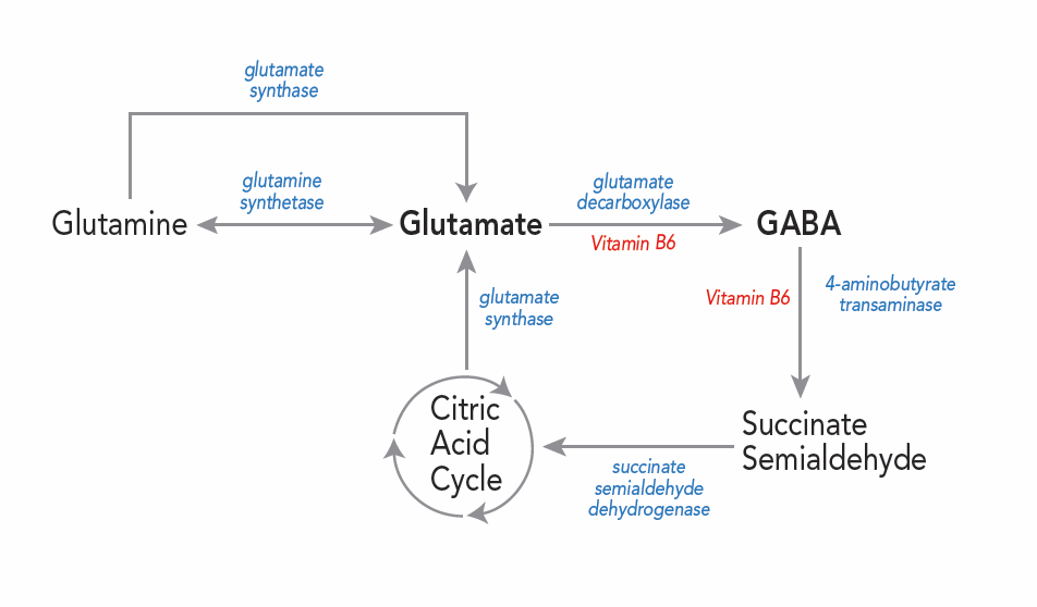 The Vicious Cycle of Nutritional Deficiencies Associated With SIBO And SIBO Diet 2