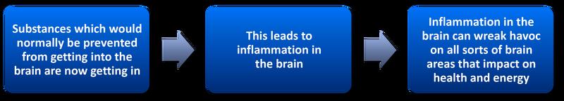 Blood Brain Barrier Permeability Testing 3