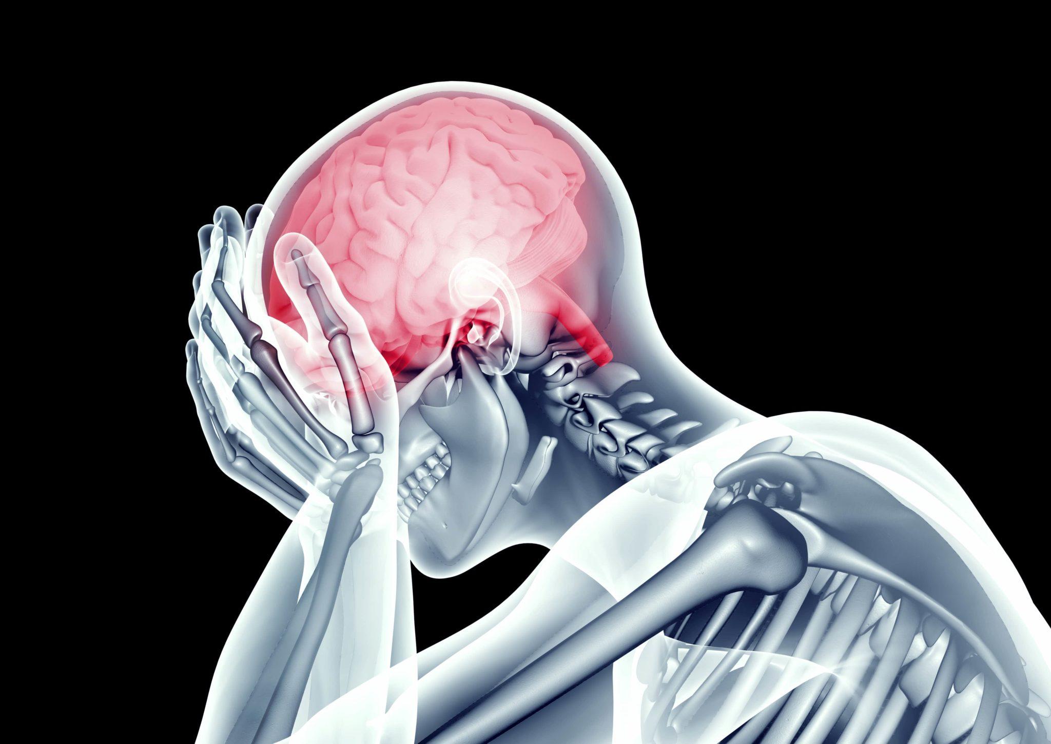 Blood Brain Barrier Permeability Testing 4