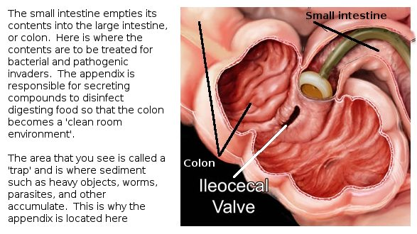 Video 4 Does The Pill Cause SIBO? (Small Intestinal Bacterial Overgrowth) 5