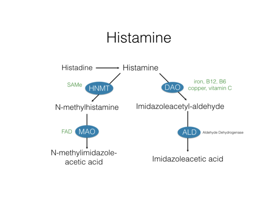 Image result for enzymes that break down histamine