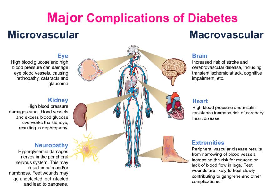 Diabetes or Insulin Resistance 5
