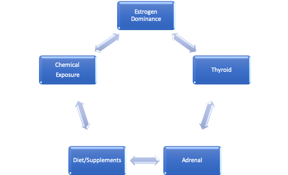 5 Way to Reduce Estrogen Dominance and Your Thyroid
